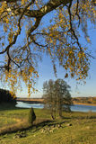 Autumn tree. Beautiful autumn tree, typical Swedish landscape Stock Images