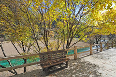 Autumn tree  and bench in Jiuzhaigou Stock Image