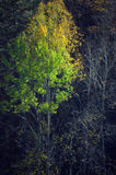Autumn tree on a black background. (abstract photography Stock Photo