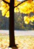 Autumn tree blurred  monocle. Autumn maple tree blurred  monocle Stock Photo