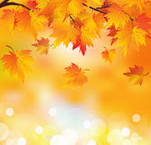 Autumn tree branch. Abstract autumn background. Autumn leaves in yellow orange colors. Golden autumn Stock Photo