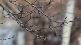 Autumn Tree Branch. Bare branch slowly swaying in the wind stock footage
