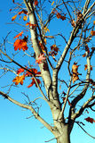 Autumn tree branch. Stock Photo