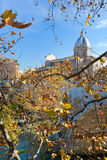 Autumn tree branch under Tiber river in Rome Stock Photos