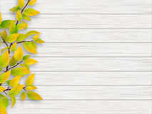 Autumn tree branch on white wooden background Stock Images