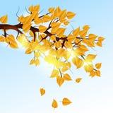 Autumn tree branch Stock Photography