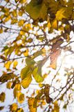 Autumn tree branches stock photo