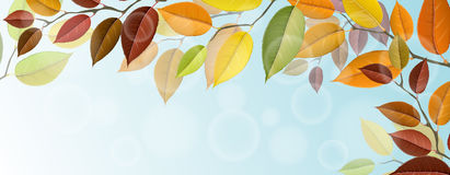 Autumn tree branches with colorful leaves. Autumn horizontal banner with tree branches and colorful leaves in corner. Realistic vector illustration for autumn Stock Photos