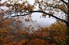 Autumn. Tree branches and fog Stock Images