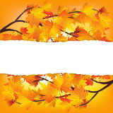 Autumn tree branches. Twigs of autumn trees. Yellow red autumn leaves. Autumn background with space for writing vector illustration