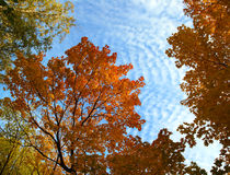 Autumn tree branches under sky Royalty Free Stock Photography