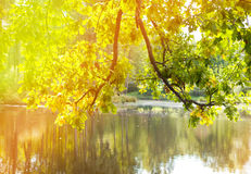 Autumn tree with bright foliage is reflected in the lake Stock Photography