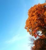 Autumn tree in bright sky royalty free stock image