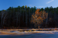Autumn Tree on the Cahaba River royalty free stock photo