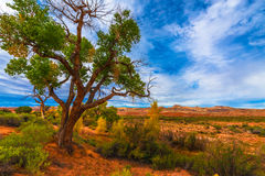 Autumn Tree in the Canyon - Utah Fall Landscape Royalty Free Stock Photography