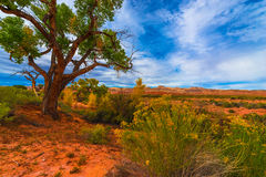 Autumn Tree in the Canyon - Utah Fall Landscape Royalty Free Stock Image