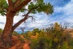 Autumn Tree in the Canyon - Utah Fall Landscape Royalty Free Stock Photos