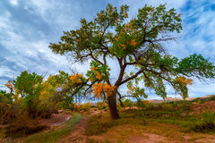 Autumn Tree in the Canyon - Utah Fall Landscape Stock Image