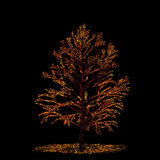 Autumn tree card Stock Photography
