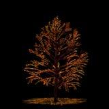 Autumn tree card. Beautiful autumn tree decoration, stylized brush drawing Stock Photography