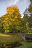 Autumn tree in Catherine park, Pushkin, St.Peterburg's (Former T Royalty Free Stock Photo