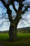 Autumn Tree, Chatsworth-Park, Chatsworth, Derbyshire Stockbilder
