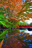 Autumn tree at the Chinese park reflected i n the water Royalty Free Stock Photography