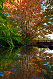 Autumn tree at the Chinese park reflected i n the water Stock Images
