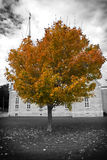 Autumn tree and church Stock Images