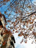 Autumn tree and clouding clear on a street in Arad city royalty free stock image