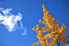 Autumn tree and cloudscape Royalty Free Stock Photos