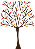Autumn tree. With colorful leafs Stock Photography