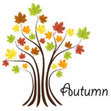 Autumn tree with colorful leaves. Abstract autumn tree with colorful leaves for autumn decoration Stock Photography