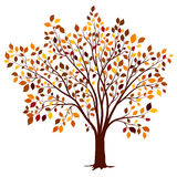 Autumn tree with colorful leaves vector Royalty Free Stock Images