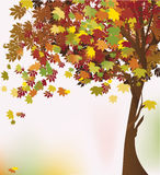 Autumn tree. Autumn colorful tree. Vector illustration Royalty Free Stock Image