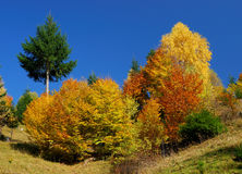 Autumn tree colors Royalty Free Stock Photo