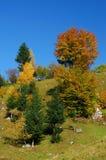 Autumn tree colors Stock Photos