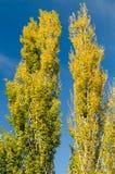 Autumn Tree Colors Imagen de archivo libre de regalías