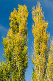 Autumn Tree Colors royalty free stock image