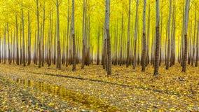 Autumn tree colors at a local tree farm Royalty Free Stock Photos