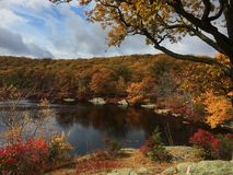 Autumn Tree Colors in Upstate New York Royalty Free Stock Image
