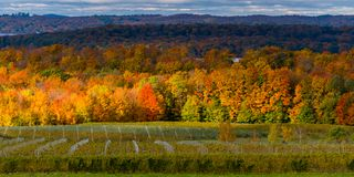 Autumn tree colors and the vineyards on Old Mission Peninsula stock image
