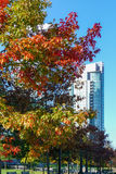 Autumn foliage on tree in Vancouver. The colourful autumn foliage on a tree in Vancouver, BC, Canada Royalty Free Stock Photo