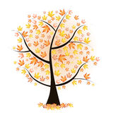 Autumn tree with colourful leaves Stock Photo