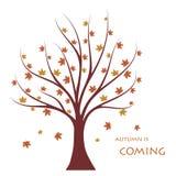 Autumn tree. Stock Photos
