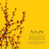 Autumn tree. Composition with room for text Stock Photography