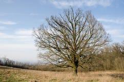 Autumn Tree con el cielo azul Imagenes de archivo