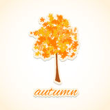 Autumn Tree. Royalty Free Stock Photo