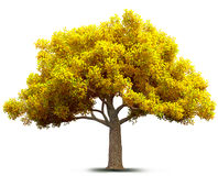 Autumn tree. 3D illustration Royalty Free Stock Images