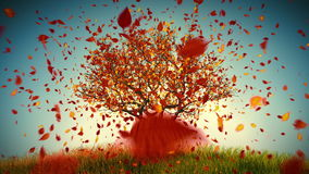 Autumn Tree. Defoliation stock footage